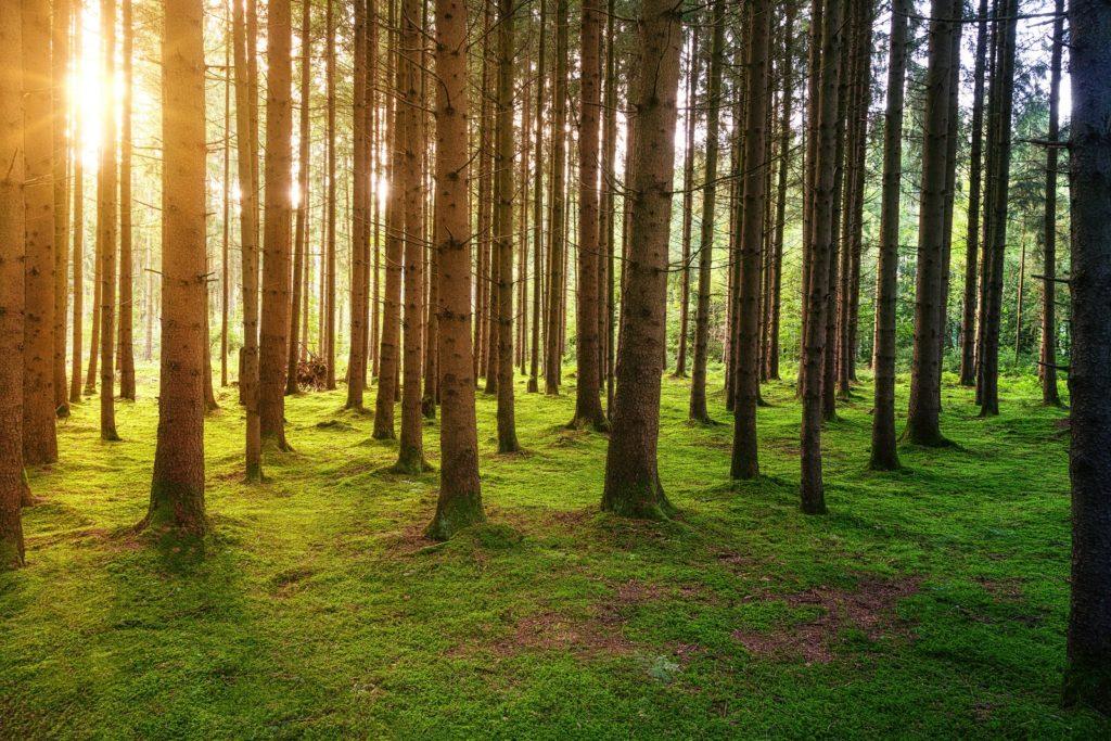 Madrid va créer une forêt urbaine pour lutter contre le changement climatique